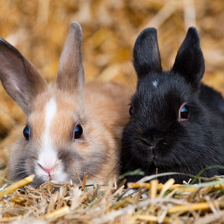 Two bunnies