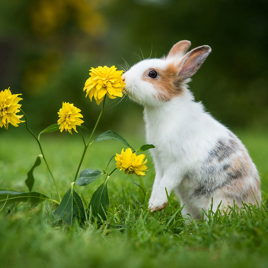 Bunny smelling flowers